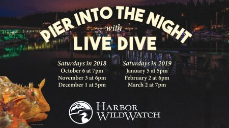 Harbor Wildwatch's Pier Into the Night Live Dive @ Jerisich Dock | Gig Harbor | Washington | United States