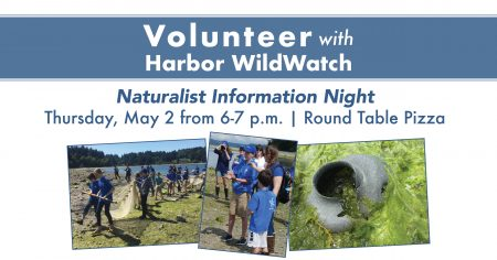 Round Table Pizza Washington State.Volunteer Naturalist Information Night Event Resources Gig Harbor