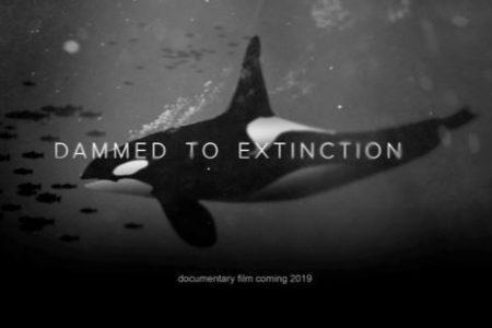 Dammed to Extinction @ Agnus Dei Lutheran Church | Gig Harbor | Washington | United States