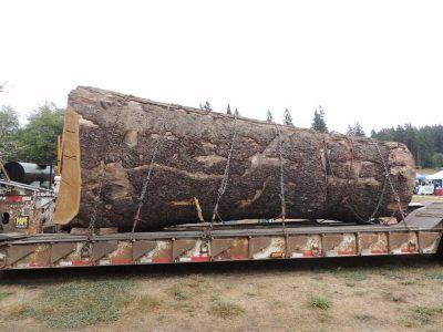 Key Peninsula Logging Show @ Gateway Park - | Gig Harbor | Washington | United States